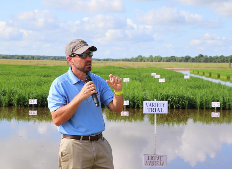 Dr. Dustin Harrell, Research Agronomist and Director, LSU Rice Research AgCenter