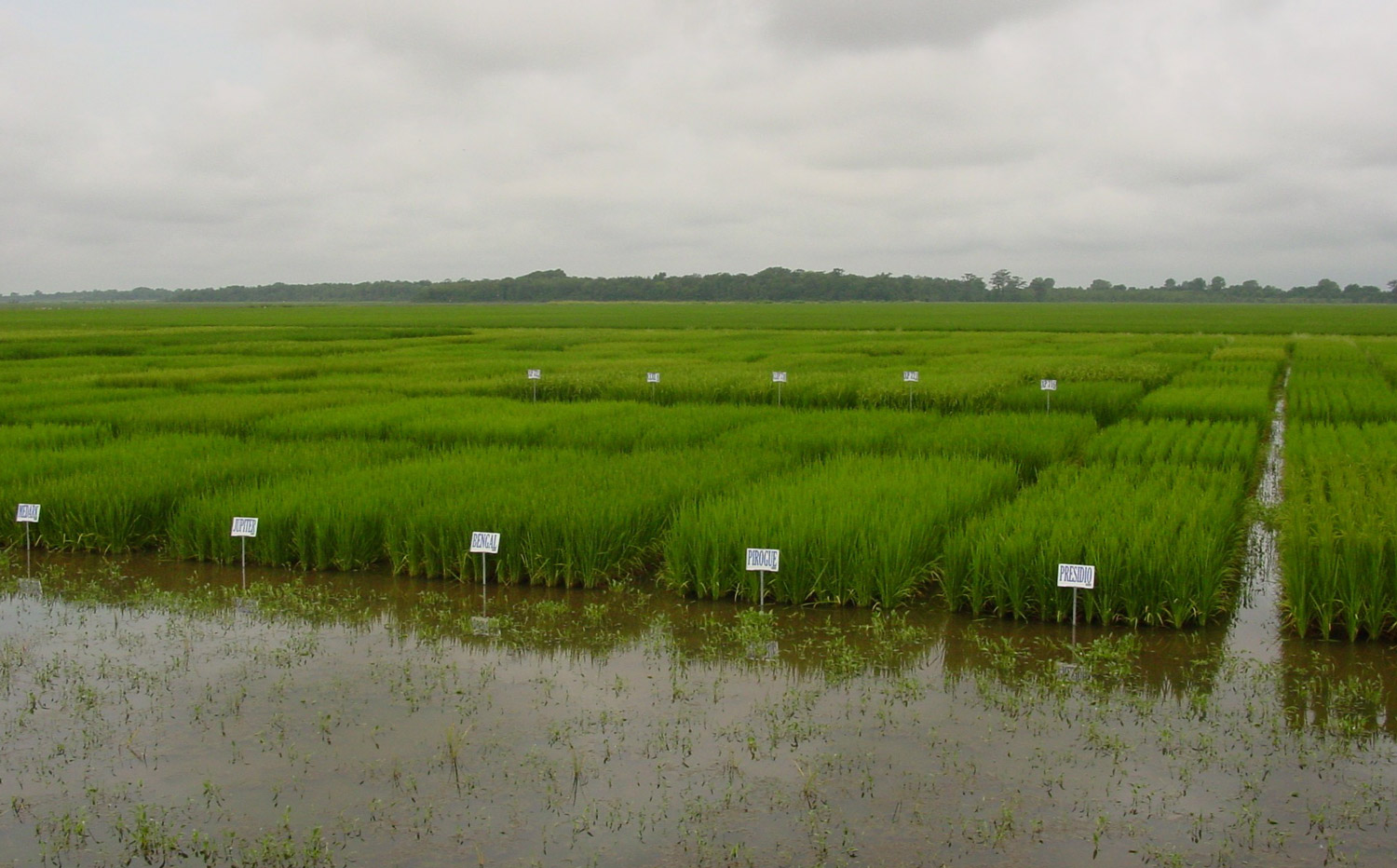 The Importance of Research to the U.S. Rice Industry